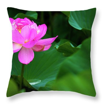 Throw Pillow featuring the photograph Blooming Pink Lotus Lily by Dennis Dame