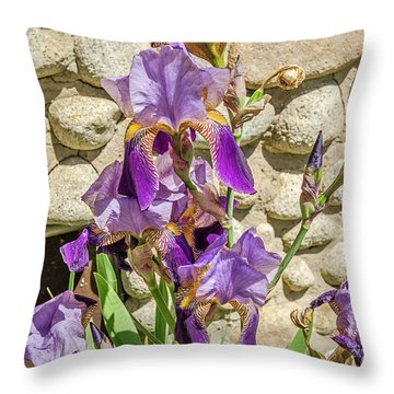 Throw Pillow featuring the photograph Blooming Purple Iris by Sue Smith