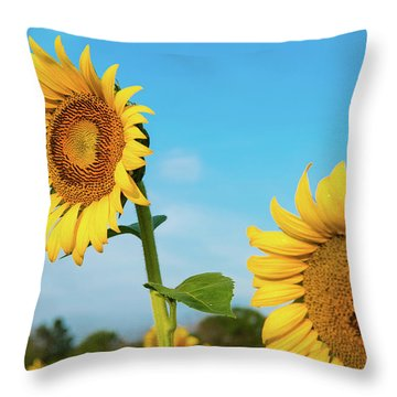 Throw Pillow featuring the photograph Blooming Sunflower In Blue Sky by Dennis Dame