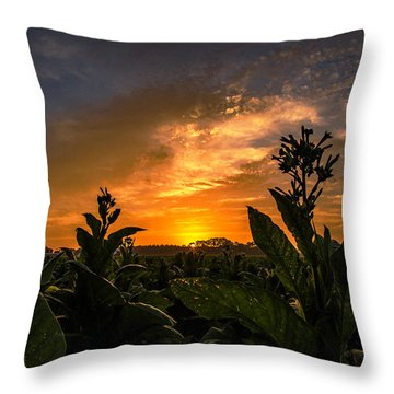 Blooming Tobacco Throw Pillow