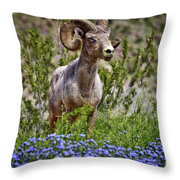 Blooms And Bighorn In Anza Borrego Desert State Park  Throw Pillow