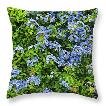 Blossoms Of Phlox Flowers Throw Pillow
