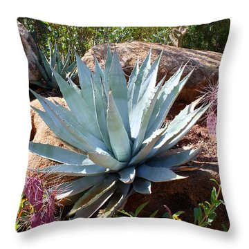 Throw Pillow featuring the photograph Blue Agave by Kathryn Meyer