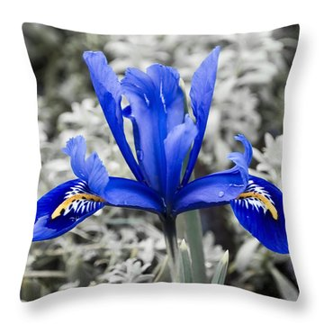 Blue Along Throw Pillow by Svetlana Sewell