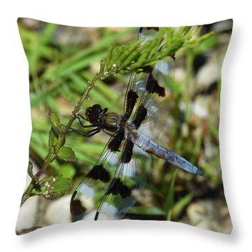 Throw Pillow featuring the photograph Blue And Brown On Green by Sally Sperry