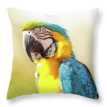 Blue And Yellow Macaw With Copy Space Throw Pillow