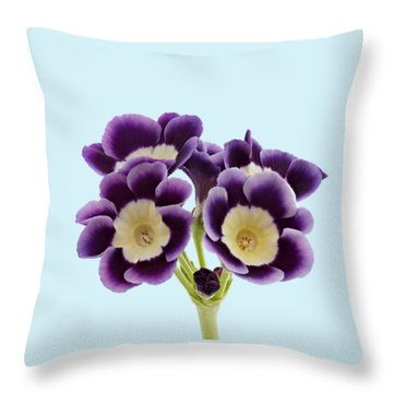 Throw Pillow featuring the photograph Blue Auricula On A Transparent Background by Paul Gulliver
