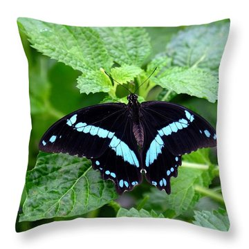 Blue Banded Swallowtail Butterfly Throw Pillow