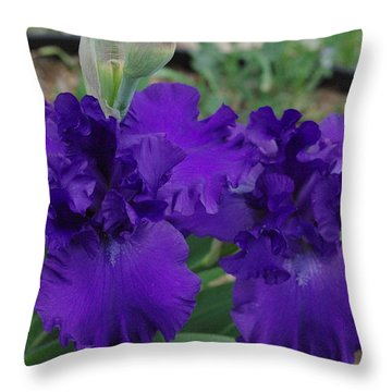 Blue Bearded Irises Throw Pillow by Robyn Stacey