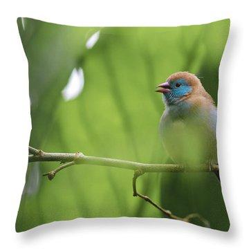 Blue Bird Chirping Throw Pillow