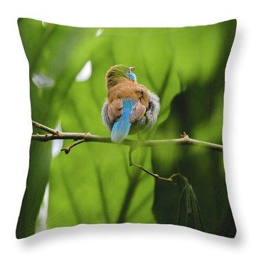 Blue Bird Has An Itch Throw Pillow