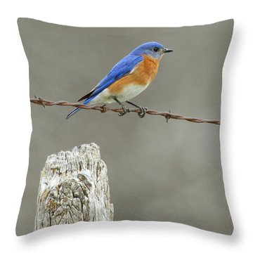 Blue Bird On Barbed Wire Throw Pillow by Robert Frederick