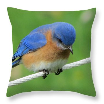 Blue Bird On Clothesline Throw Pillow