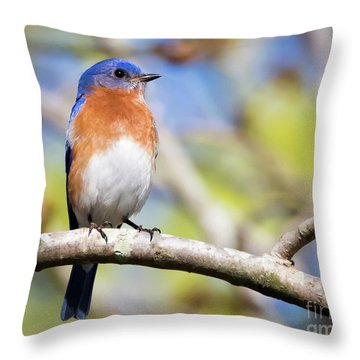 Throw Pillow featuring the photograph Blue Bird by Ricky L Jones