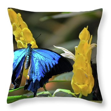 Blue Beauty Butterfly Throw Pillow