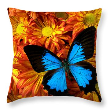 Blue Butterfly On Mums Throw Pillow by Garry Gay