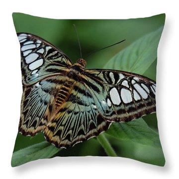 Blue Clipper Butterfly Open Throw Pillow