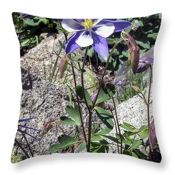 Blue Columbine Colorado Mountains Throw Pillow