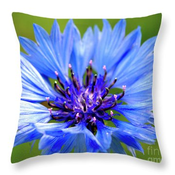 Blue Cornflower Throw Pillow