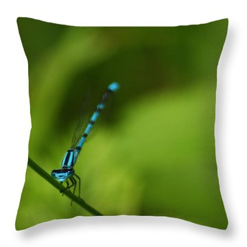 Throw Pillow featuring the photograph Blue Dragonfly by Ramona Whiteaker