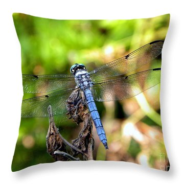 Throw Pillow featuring the photograph Blue Dragonfly by Terri Mills