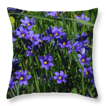 Blue Eyed Grass Throw Pillow by Robyn Stacey