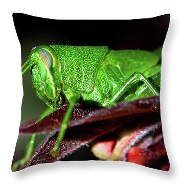 Blue Eyed Green Grasshopper 001 Throw Pillow