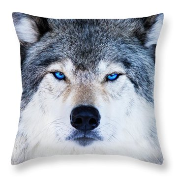 Throw Pillow featuring the photograph Blue Eyed Wolf Portrait by Mircea Costina Photography