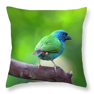 Blue-faced Parrotfinch Throw Pillow