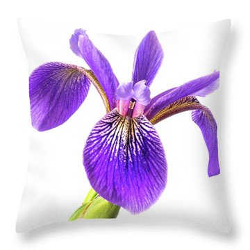 Blue Flag Iris 3 Throw Pillow by Jim Hughes