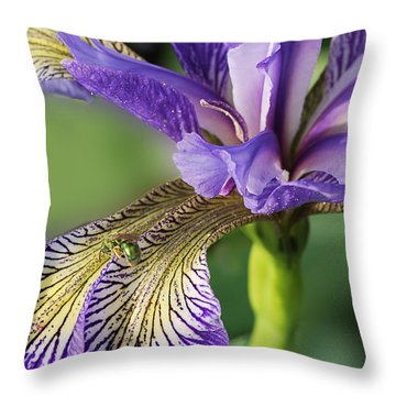 Throw Pillow featuring the photograph Blue Flag  by Susan Capuano