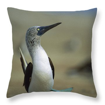 Blue-footed Booby Sula Nebouxii Throw Pillow by Tui De Roy