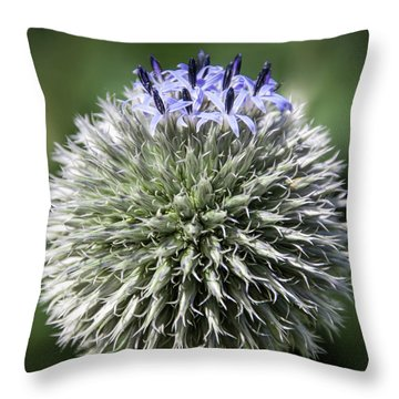 Blue Globe Thistle 3 - Throw Pillow