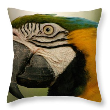 Blue Gold Macaw South America Throw Pillow