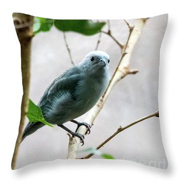 Blue-grey Tanager 2 Throw Pillow
