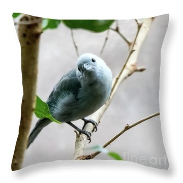 Blue-grey Tanager Throw Pillow