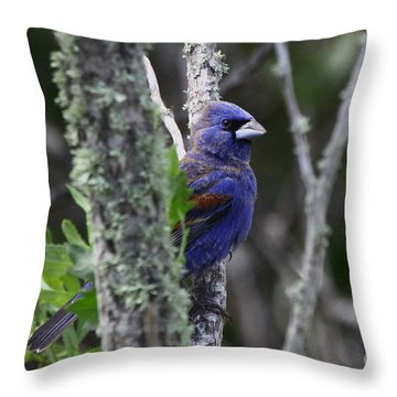 Blue Grosbeak In A Mangrove Throw Pillow