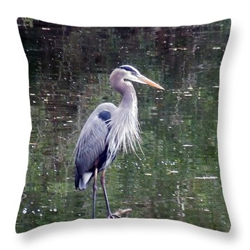 Blue Heron Fishing  Throw Pillow by Don Wright