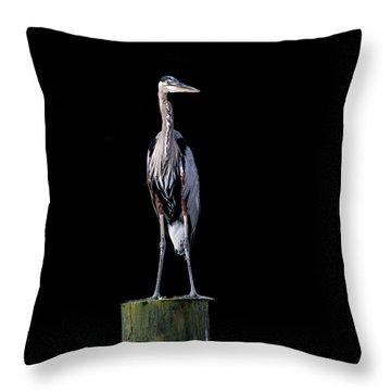 Blue Heron Prestige Throw Pillow