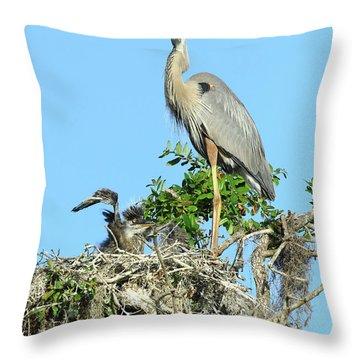 Throw Pillow featuring the photograph Blue Heron Series Baby 2 by Deborah Benoit