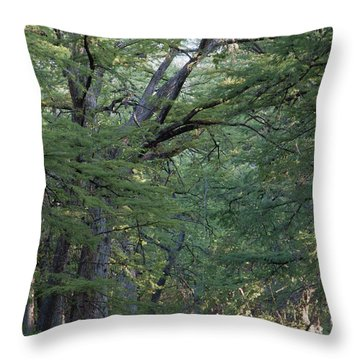 Blue Hole Morning Throw Pillow
