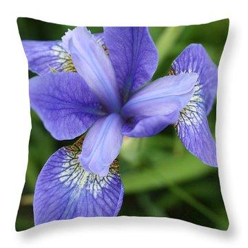 Blue Iris 5 Throw Pillow by Bruce Bley