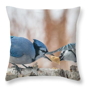 Blue Jay Battle Throw Pillow by Patti Deters