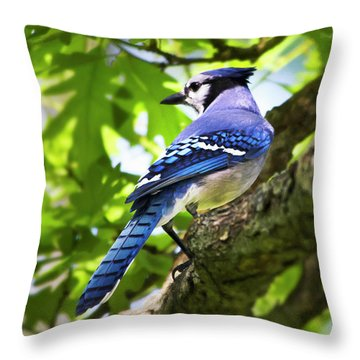 Blue Jay Throw Pillow by Christina Rollo