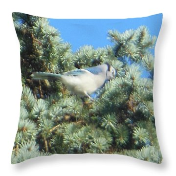 Blue Jay Colorado Spruce Throw Pillow