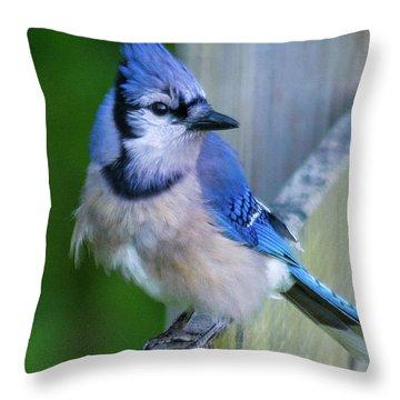 Blue Jay Fluffed Throw Pillow