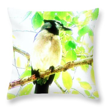 Blue Jay IIi Throw Pillow by Clarice  Lakota