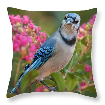 Blue Jay In Crepe Myrtle Throw Pillow