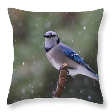 Blue Jay In Falling Snow Throw Pillow