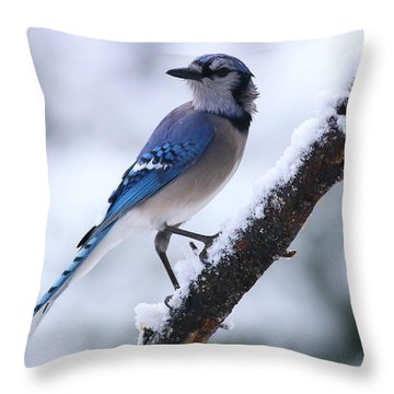 Blue Jay In Snow Throw Pillow